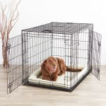 The Best Indoor Dog Crates And Kennels In 2019 Dogs