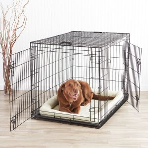 dog at home in a cage
