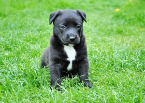Small Puppy On Grass