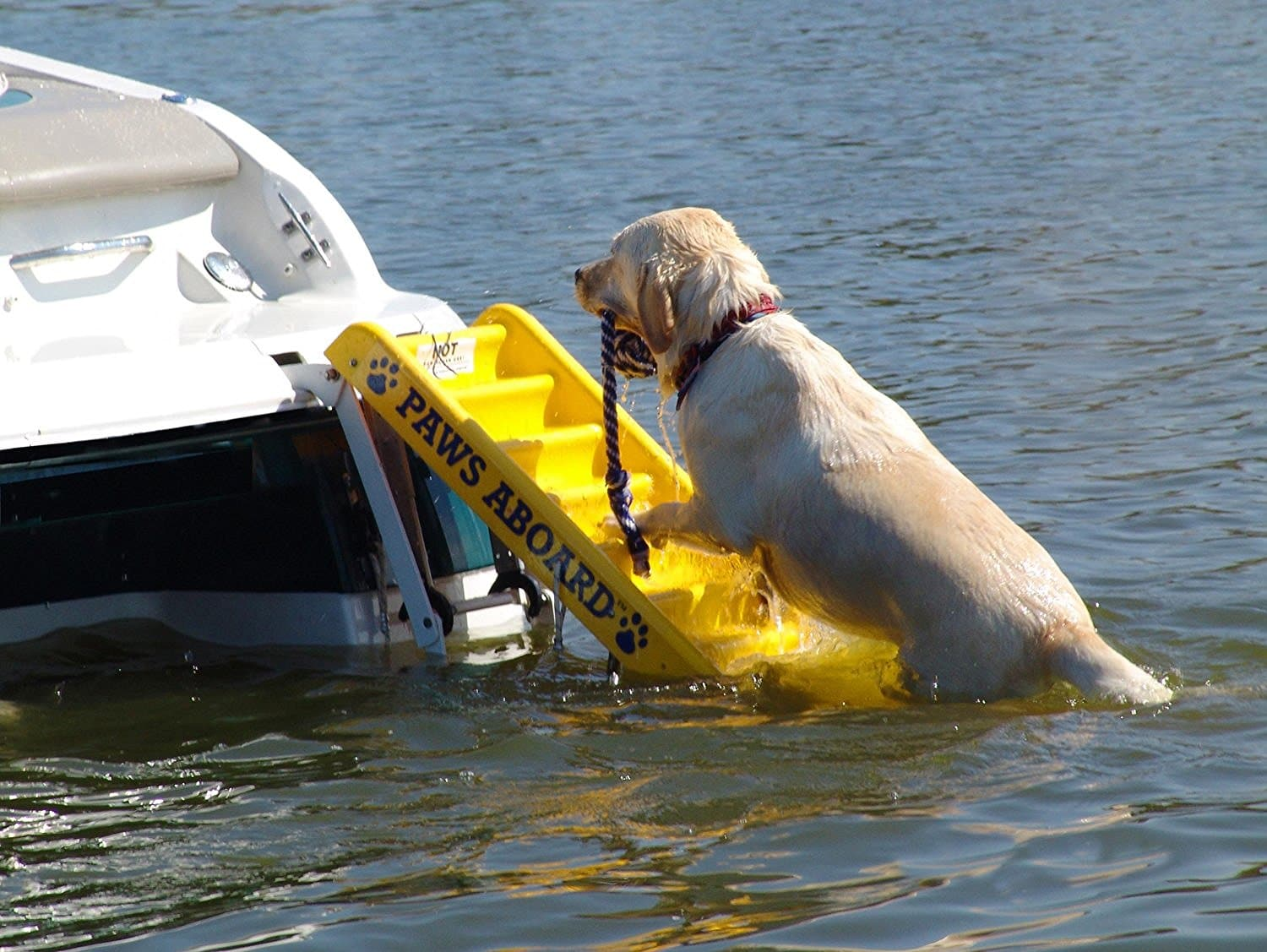 The Best Dog Ramps And Ladders For Boats 2020 Dogs Recommend