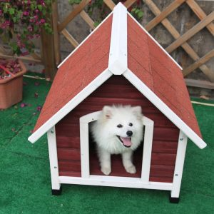 Dog Sitting in a Dog House
