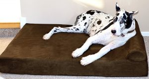 "Big Barker 7"" Pillow Top Orthopedic Dog Bed with a Large Dog on it"