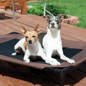 Dogs Sitting on The Dog Bed