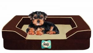 Sealy Lux Quad Layer Orthopedic Dog Bed with Cooling Gel with a Puppy