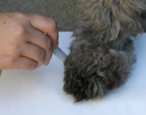 how to measure dog's paw size