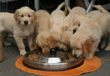 Dry dog food for puppies