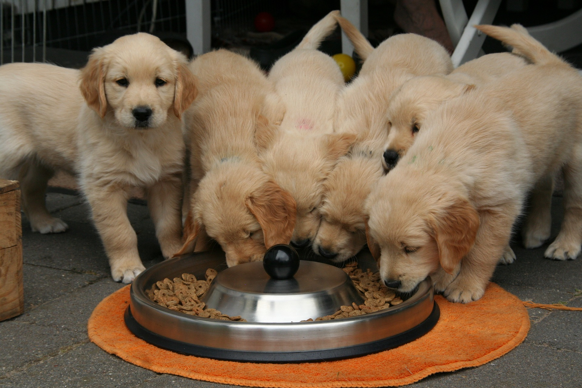 The Best Dog Food >> The Best Dry Dog Food For Puppies In 2020 Dogs Recommend