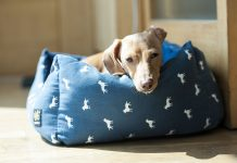 Best Rated Large Dog Beds