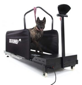 Dog Runner Large Treadmill