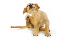 Flea and tick collars for dogs