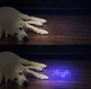 UV Flashlight Matching with Pet Odor Eliminator