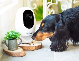 Dog Sniffing Automatic Treat Dispencer