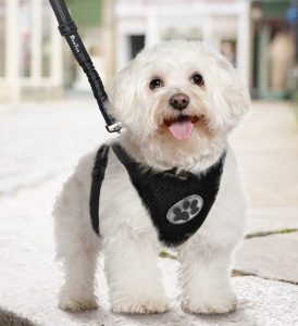 SlowTon Dog Car Harness Plus Connector Strap