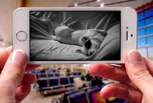 TOOGE Pet Camera app for iphone