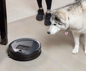 Huskey Looking at The Automatic Vacuum Cleaner