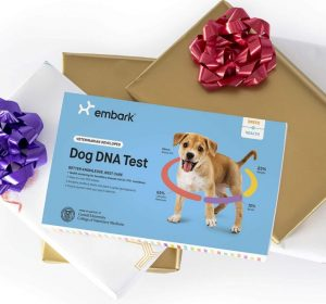 Embark Dog DNA Test | Breed & Health Kit