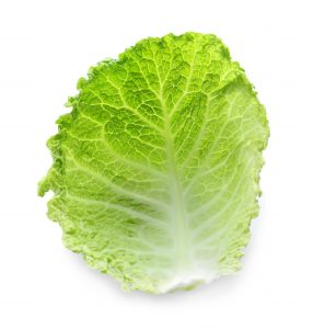 Fresh green cabbage leaf on white background