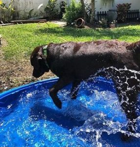 The 4 Best Swimming Pools For Dogs Of 2020 Dogsrecommend