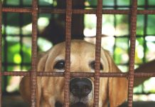 Dog Siting In A cage