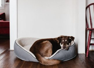Dog On The Pet Bed