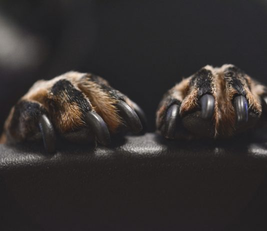 Close Up Of Dog Nails And Paws