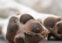 Close Up of Dog Paw