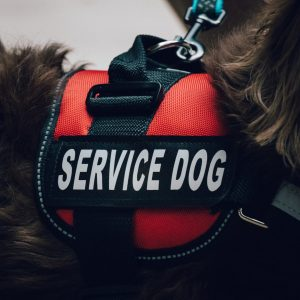 Close Up of The Service Dog Vest On The Dog