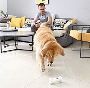 Large Dog Plays with Wickedbone Smart Bone in the Room