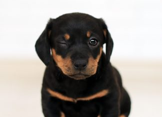 Cute Small Black And Brown Dog