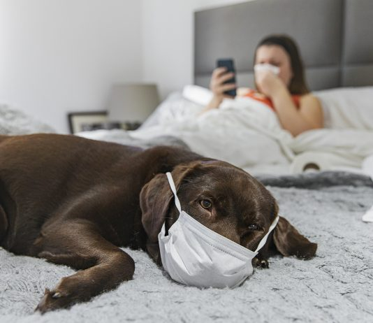 Shot of a dog on the bed with a mask on. Owner is behind with the flu