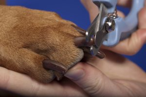 close up of dog nail trimming