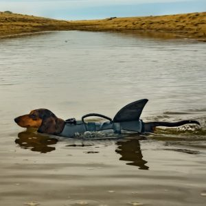 Dog In Shark Life Jacket