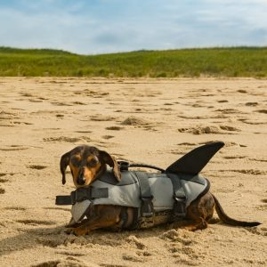 Dog in The Shark Life Jacket on The Beach