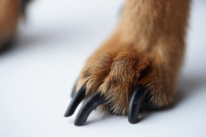 dog's paw with long black claws