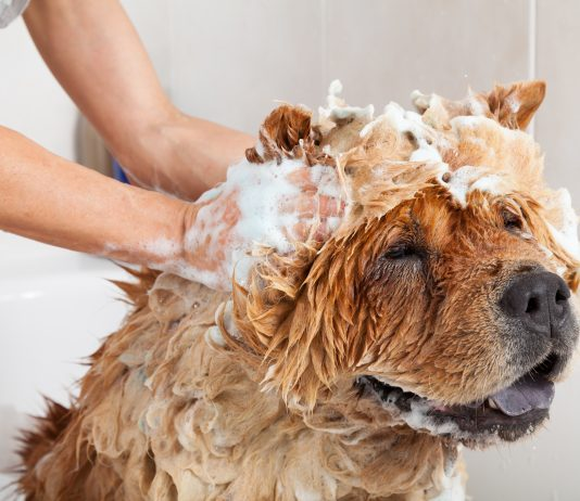 Bubble Bath to a lovely dog chow chow
