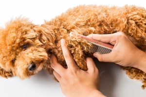 Person detangling wooly dog hair with a comb