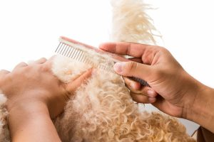 Person combing matted dog hair with a comb