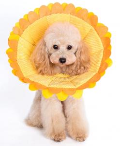 Noah Recovery Dog Head Cone