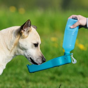 Best Dog Water Bottle