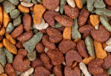 Close Up of Dog Food