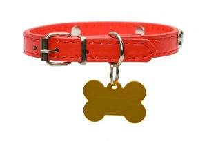 Close Up of Isolated on White Best Dog Collar