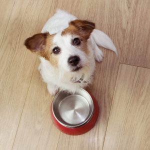 How to Encourage Weight Loss in Dogs