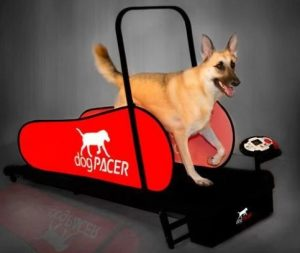 OGPACER LF 3.1 FOLDING FITNESS DOG TREADMILL FOR DOGS UP TO 179 LBS