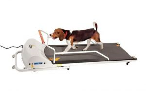 GOPET PETRUN PR720F TREADMILL FOR DOGS UP TO 132 LBS