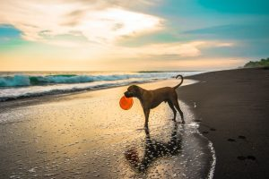 Short Coated Brown Dog on Seashore