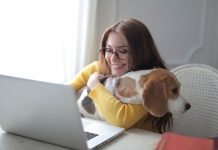 woman in yellow sweater holding brown and white short coated Beagle dog