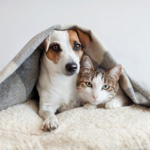 Best Blanket for Pets