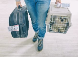 little dog in the airline cargo pet carrier, at the airport after a long journey