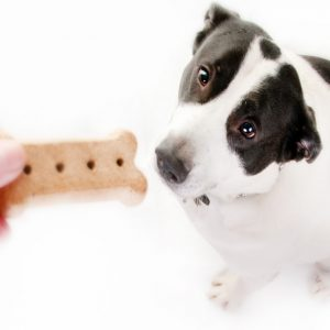 Dog With Dog Treat Isolated on White