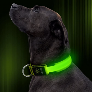 Illumifun Led Lighted Dog Collar